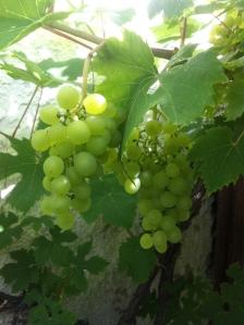 Eget vin snart?