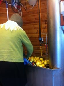 Tvätta äpplen